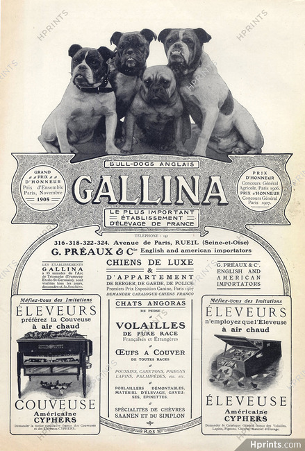 Gallina (Dogs) Ets G  Préaux & Cie 1907 English Bulldog
